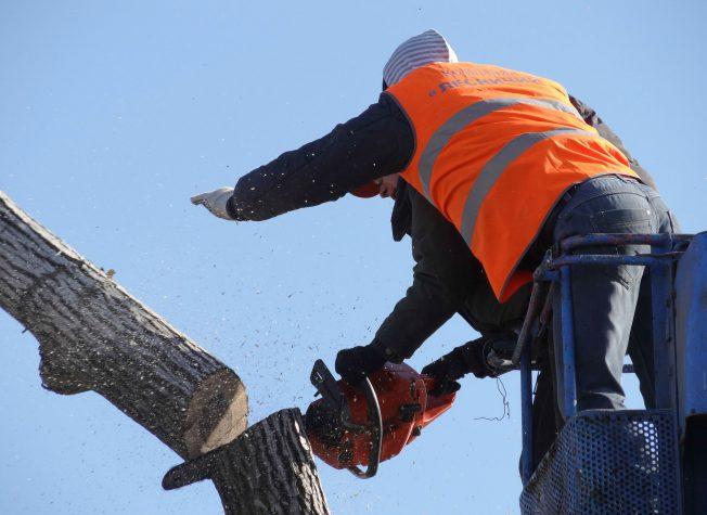 מנוף סל לגיזום לכל סוגי העצים והצמחיה